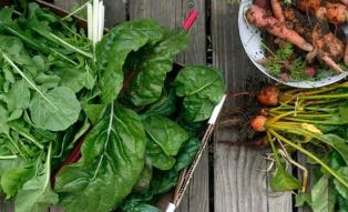 vland csa veggies
